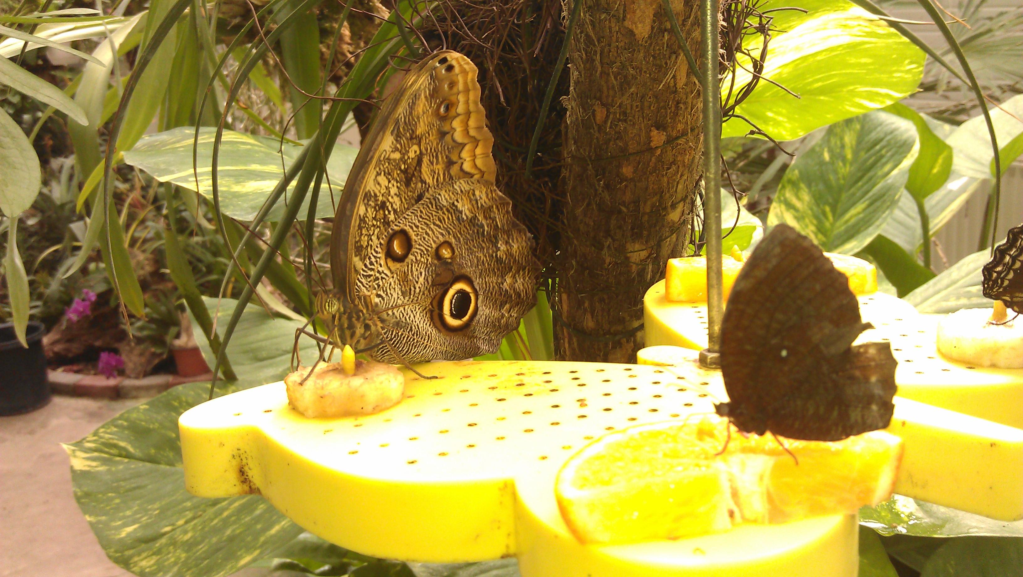 Schmetterlingsfarm in Trassenheide